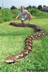 Longest Snakein the World